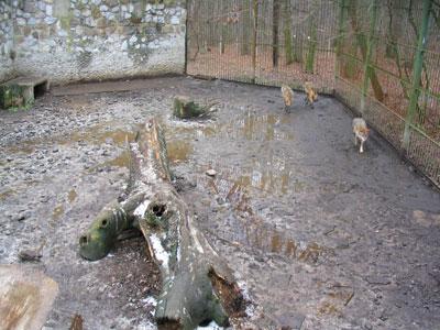 Ro Zoo