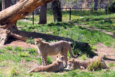 Us Zoo